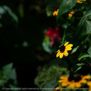 015-flower-ankeny-19aug19-09x09-006-500-2963
