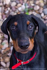 015-dog_hans-ankeny-24aug19-08x12-008-500-2976