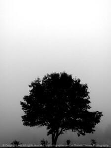 015-fog-ankeny-13nov17-09x12-201-bw-2679