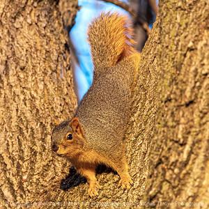 015-squirrel-ankeny-05dec19-06x06-006-300-4718