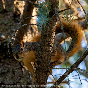 015-squirrel-ankeny-27aug19-09x09-006-350-3060