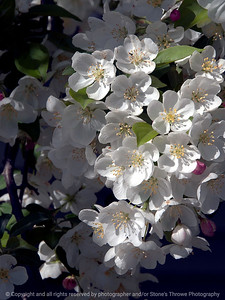 flower-wdsm-27apr15-09x12-001-2740