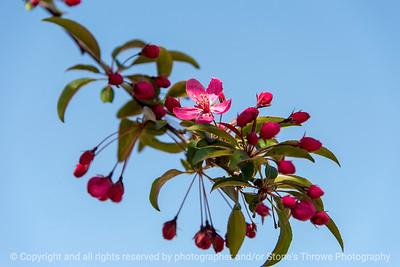 015-blossom-wdsm-07may18-12x08-500-4411