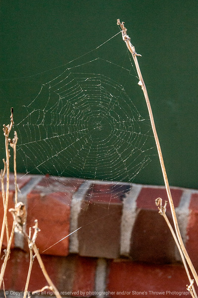 015-spider_web-wdsm-28oct13-5492