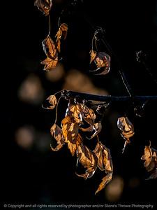 015-leaves-wdsm-09dec14-09x12-001-0986