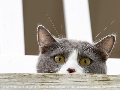cat-wdsm-08jul15-12x09-002-3778