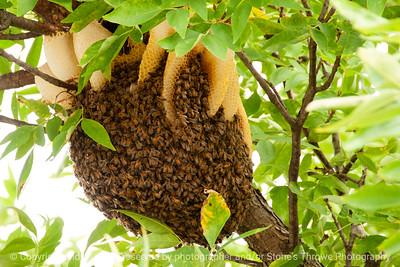 015-bee_hive-wdsm-28sep13-4358