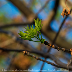 015-leaves-wdsm-01may21-09x09-006-400-0923