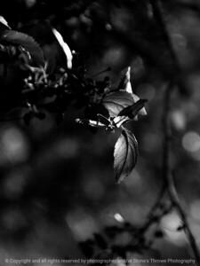 015-leaf-wdsm-13may16-09x12-001-bw-8835