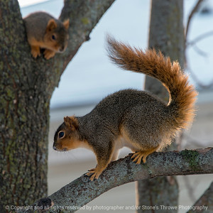 015-squirrel-wdsm-07jan18-09x09-006-3488