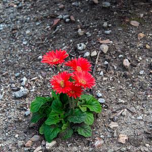 015-flower-wdsm-09oct19-09x09-006-400-4149