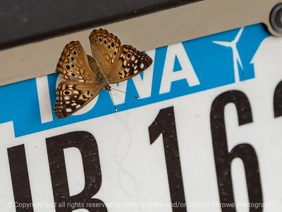 015-butterfly-wdsm-24jun21-12x09-202-3240