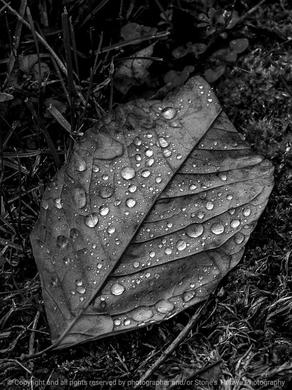 015-water_drops_leaf-wdsm-23oct14-09x12-bw1-0239