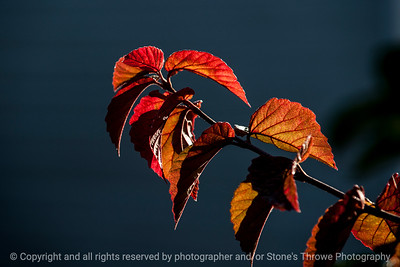 015-leaves_autumn-wdsm-18x12-003-0251