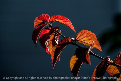 015-leaves_autumn-wdsm-18x12-003-0251