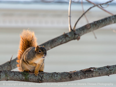 015-squirrel-wdsm-07jan18-12x09-002-3475