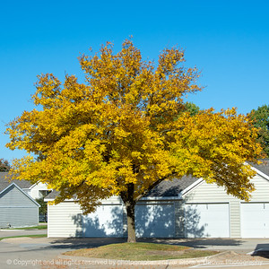 015-tree_autumn-wdsm-07oct20-09x09-006-400-8434
