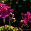 015-flower-wdsm-25oct14-18x12-003-0266