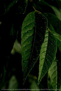 015-leaves-wdsm-26may21-08x12-008-400-1892