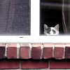 cat-wdsm-08may15-09x12-001-3265