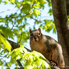 squirrel-wdsm-27apr15-12x09-002-2810