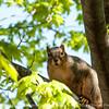 squirrel-wdsm-27apr15-12x09-002-2810