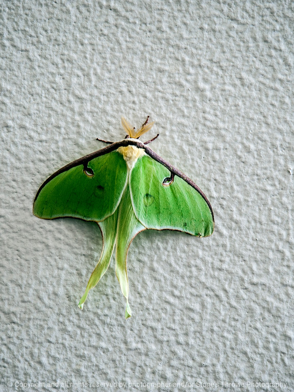 015-moth-wdsm-10jun14-002-8298
