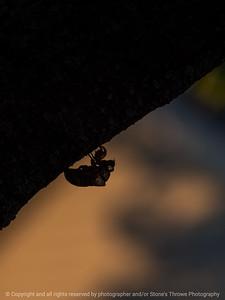 015-locust_molt-wdsm-02aug16-09x12-001-5116