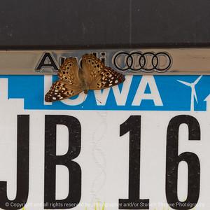 015-butterfly-wdsm-24jun21-09x09-006-400-3199