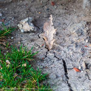 015-leaf-wdsm-06apr21-09x09-006-400-0602