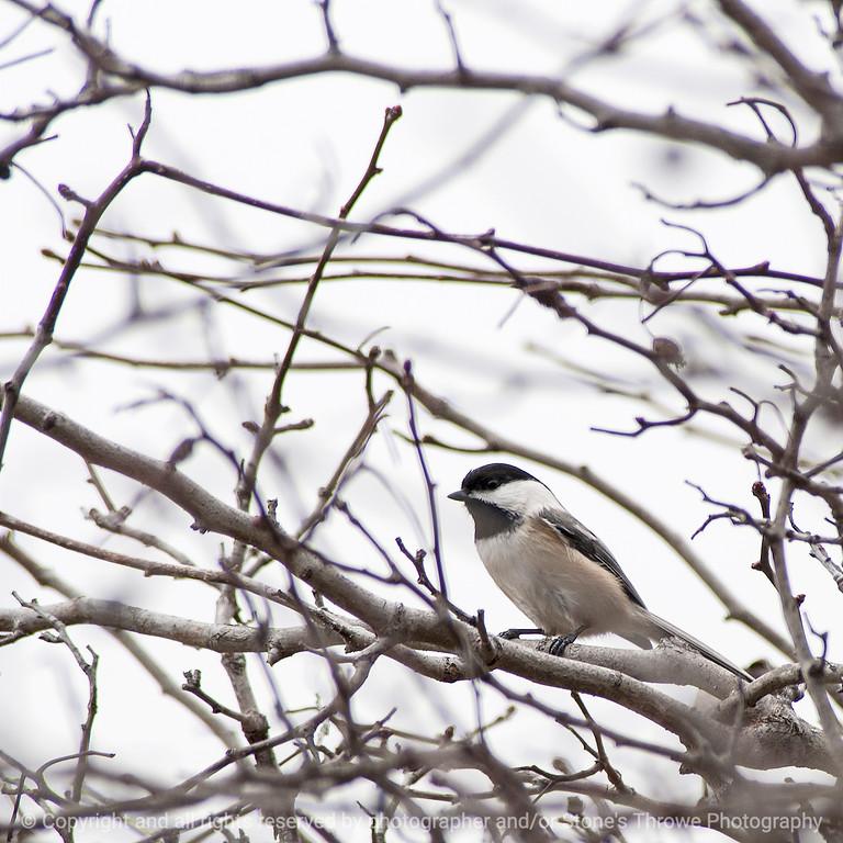 015-bird-wdsm-13dec14-09x09-006-1155
