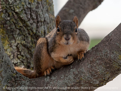 squirrel-wdsm-22oct15-12x09-002-5694