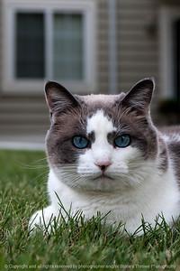015-cat-wdsm-11aug16-12x18-004-0987