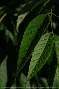 015-leaves-wdsm-26may21-08x12-008-400-1874