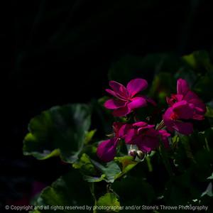 flower-wdsm-25oct15-09x09-006-5725
