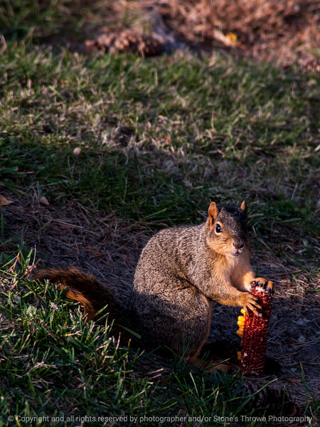 015-squirrel-wdsm-02nov14-09x12-001-0488