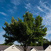015-tree-wdsm-23aug16-12x18-004-1138