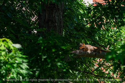 015-squirrel-wdsm-10jun19-09x06-009-300-0909