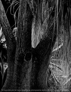 015-tree_sunlight-dsm-14jan09-cvr-bw-1202