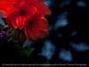 015-flower-dsm-07jul14-202-1651