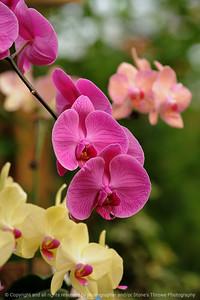 015-flower_orchid-dsm-14jan09-06x09-009-300-1170