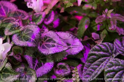 015-leaves-dsm-03feb17-18x12-003-7496