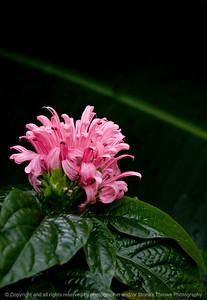 015-flower-dsm-31aug10-7538