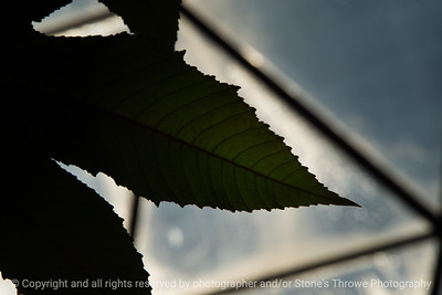 015-leaf-dsm-08jan19-09x06-009-500-9342