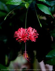 015-flower-dsm-31aug10-7548