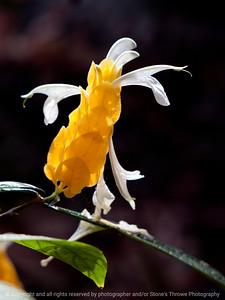 015-flower-dsm-05jul12-001-7144