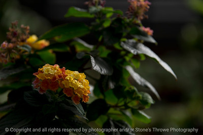 015-flower-dsm-03feb17-18x12-003-7498