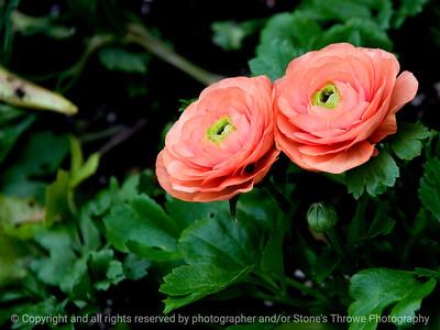 015-flower-dsm-08apr11-002-9754