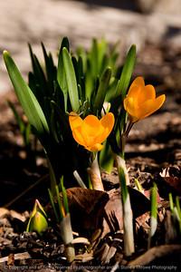 015-flower-dsm-09mar12-4141