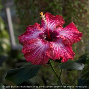 015-flower-dsm-03feb17-09x09-006-7493